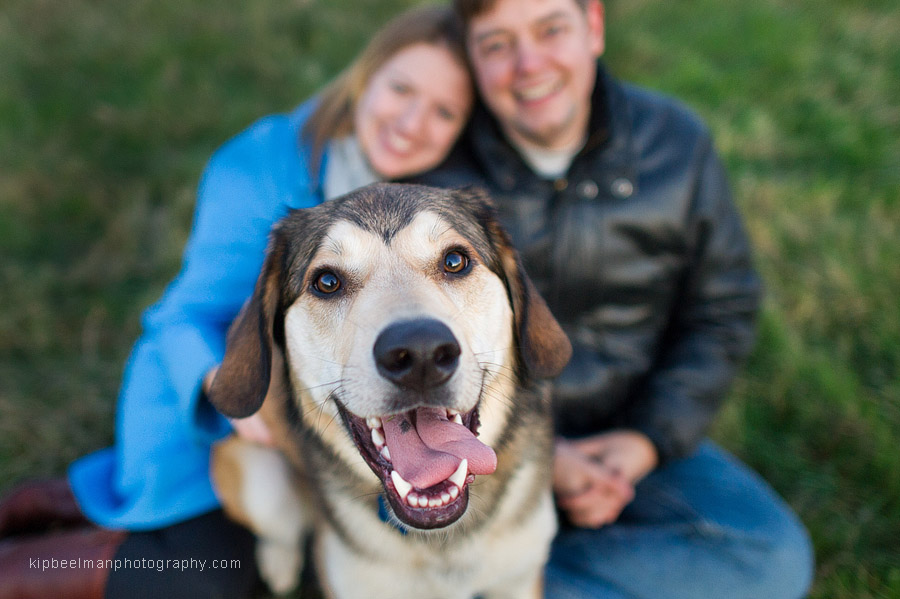 An Australian shepherd takes center stage during a Seattle engagement photography session in Seattle's Discovery Park